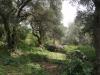 Никитский сад - 6