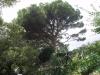 Никитский сад - 7