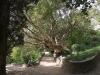 Никитский сад - 9