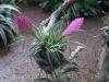 Градината - 4