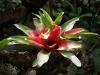 Градината - 6