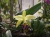 Орхидеи - 1
