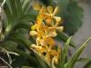 Орхидеи - 2