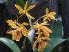 Орхидеи - 3