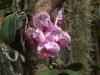 Орхидеи - 5