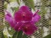 Орхидеи - 7
