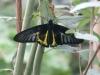 Пеперуди - 2