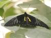 Пеперуди - 3