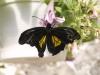 Пеперуди - 4