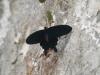 Пеперуди - 5