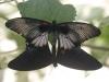 Пеперуди - 6