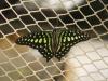Пеперуди - 7