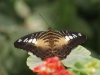 Пеперуди - 8