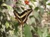 Пеперуди - 10
