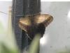 Пеперуди - 12